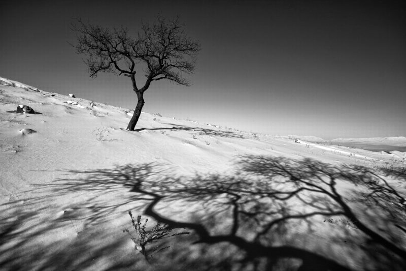 The Life of Trees in the Work of the Iranian Photographer Ali Shokri
